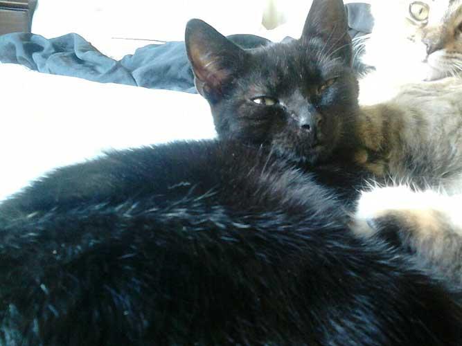 Galway Cat Rescue Facebook